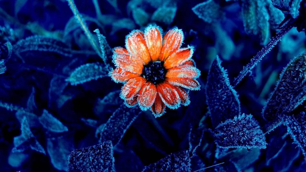 Pripravte na zimu seba a aj bylinky!