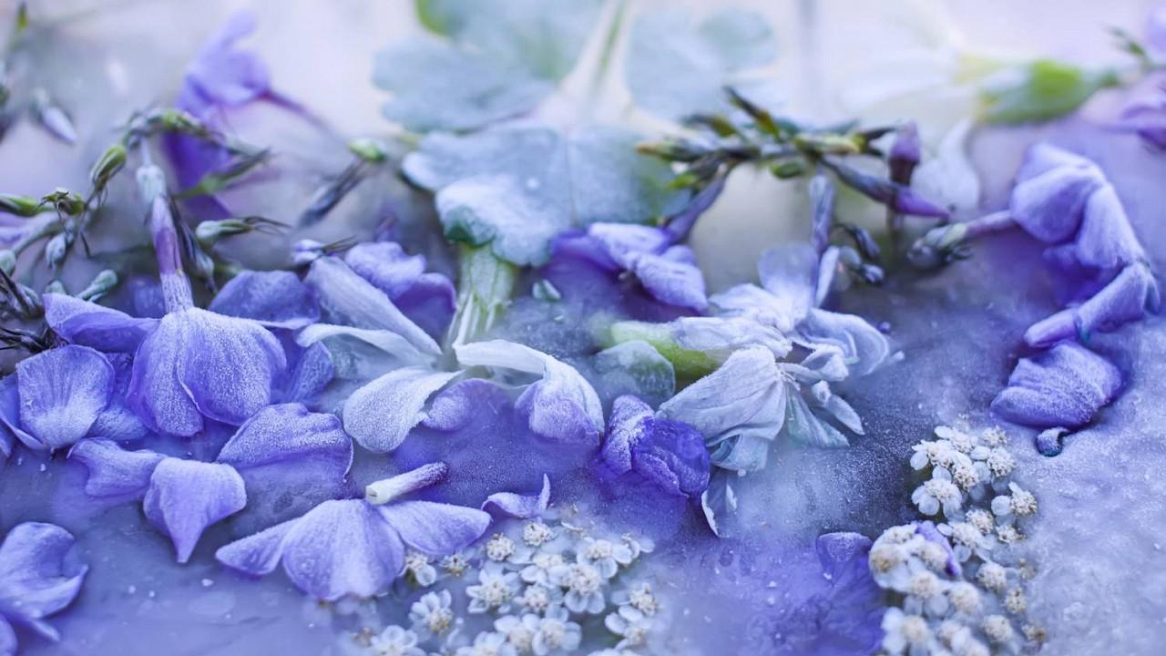 Jedlé kvety z doby ľadovej