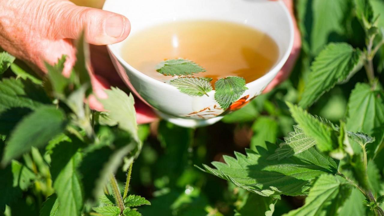 Žihľavový čaj. Burina ktorá dokonale detoxikuje vaše telo a myseľ.