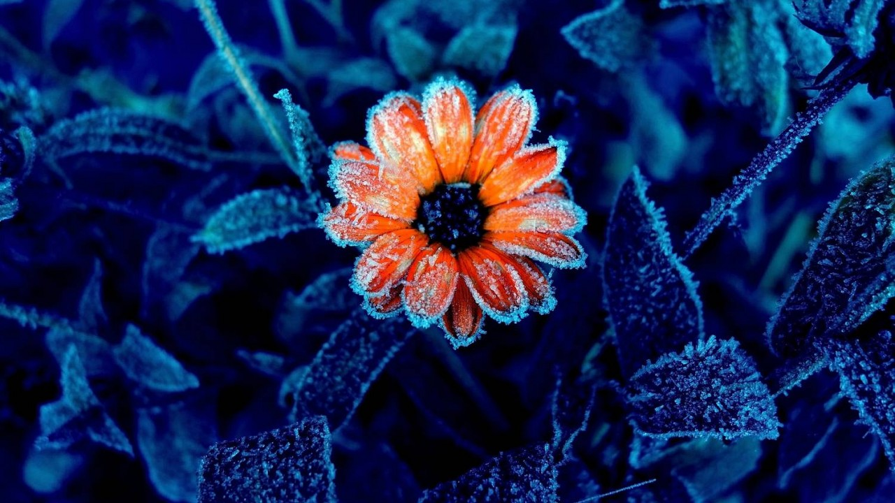 Ako pripraviť na zimu bylinky?